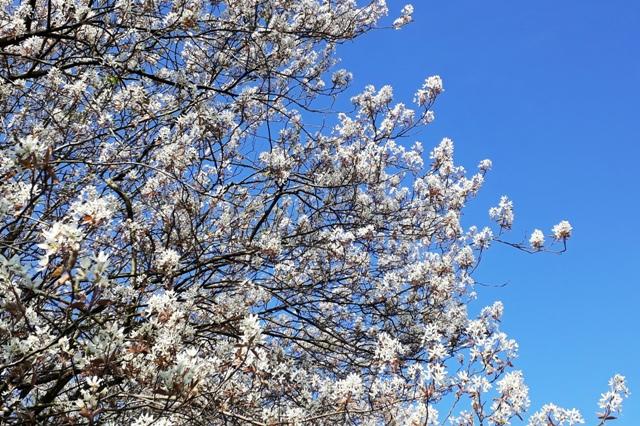 Ook met Corona is het lente in de Weerribben!